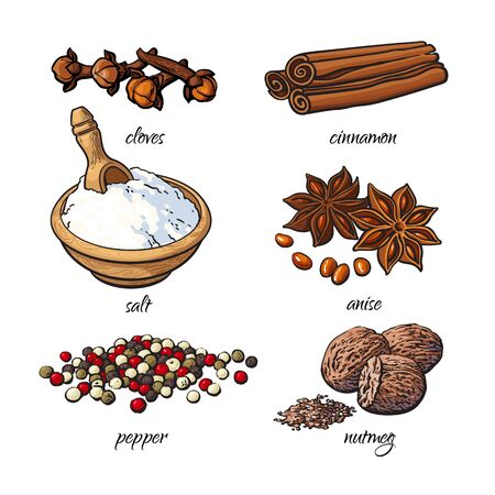 nutmeg: Set of spices - cinnamon, pepper, anise, nutmeg, salt, clove, isolated sketch style illustration on white background. Traditional cooking spices in Asian and Indian cuisine Stock Photo