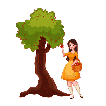 golden apple: Young beautiful woman picking apples in the garden, cartoon style vector illustration isolated on white background. Apple harvesting in the fall time, countryside gardening, harvest time concept Illustration