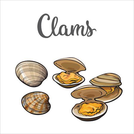 Almejas, mejillones, mariscos, ilustración del bosquejo del vector del estilo aislada en el fondo blanco. Dibujo de las almejas como un manjar de mariscos común. mejillones bajo el agua, alimentos comestibles mariscos orgánica sana