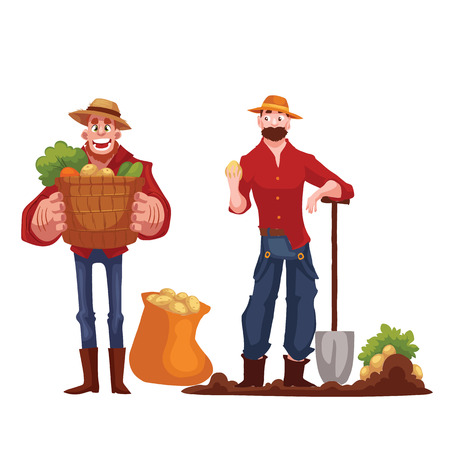 harvest time: Man harvesting potato in the field, cartoon style vector illustration isolated on white background. Digging potato in the fall time, countryside gardening, harvest time concept Illustration