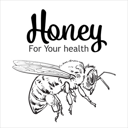 bumble bee: Flying honey bee, sketch style vector illustration isolated on white background. Realistic drawing of a bumble bee flying to the hive, apiary icon