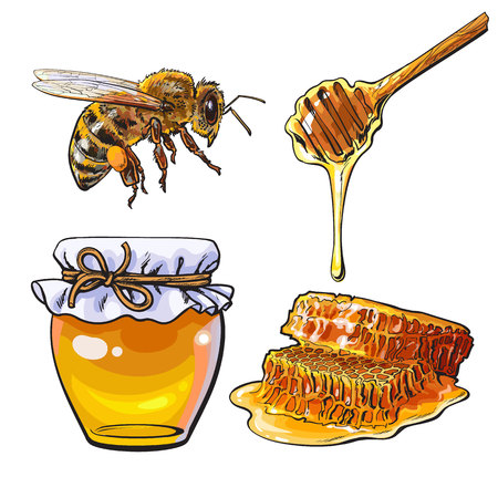 dipper: Jar of honey, bee, dipper and honeycomb, sketch style vector illustration isolated on white background. Jar, honey comb, bumble bee and wooden dipper. Honey making symbols, apiary icons