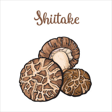 Set of shiitake edible mushrooms sketch style vector illustration isolated on white background. Collection of edible mushrooms shiitake Illustration