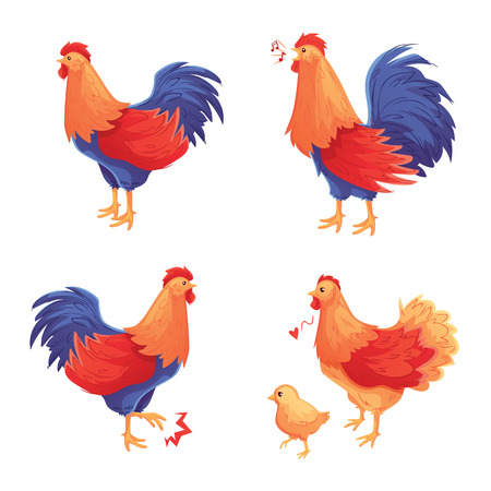 Colorful set of rooster, hen and baby chick, cartoon style vector illustration isolated on white background. Male and female chicken standing, walking and singing
