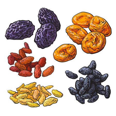 Set di frutta secca - prugne, albicocche e uva passa, schizzo stile illustrazione vettoriale isolato su sfondo bianco. Disegno di Dries prugne, albicocche e asciuga un mix di uva rossa, oro e nero Archivio Fotografico - 63577963