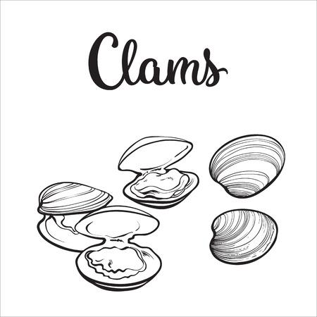 Almejas, mejillones, mariscos, ilustración del bosquejo del vector del estilo aislada en el fondo blanco. Dibujo de las almejas como un manjar de mariscos común. mejillones bajo el agua, alimentos comestibles mariscos orgánica sana Ilustración de vector
