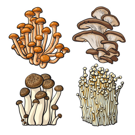 Set of shimeji, oyster, enokitake and king trumpet edible mushrooms sketch style vector illustration isolated on white background. Collection of mushrooms - shimeji, oyster, enokitake, king trumpet