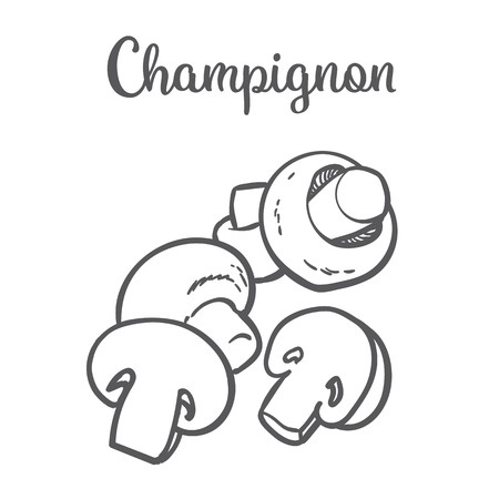 button mushroom: Set of champignon edible mushrooms sketch style vector illustration isolated on white background. Collection of edible mushrooms - button mushroom Illustration