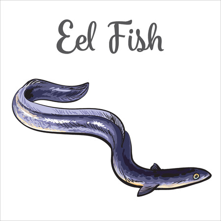 eel: Live eel fish, sketch style illustration isolated on white background. Drawing of eel fish as luxury seafood delicacy. Edible underwater creature, healthy organic seafood or shellfish food