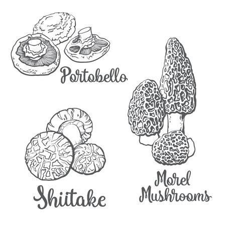 portobello: Set of portobello, morel and shiitake edible mushrooms sketch style vector illustration isolated on white background. Collection of edible mushrooms - shiitake, morel and portobello