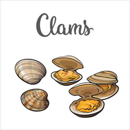 shellfish: Clams, mussels, seafood, sketch style illustration isolated on white background. Drawing of clams as a common seafood delicacy. Edible underwater mussels, healthy organic shellfish food