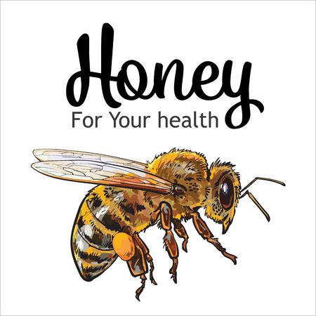 비행 달콤한 꿀벌, 흰색 배경에 고립 된 스타일 그림 스케치. 하이브, 양봉장 아이콘 비행 범블 비의 현실적인 드로잉