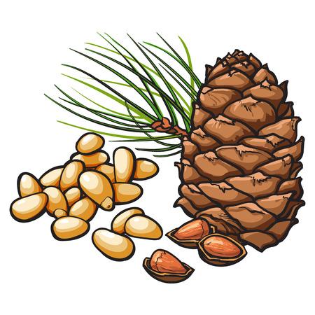 Pelées et noix de pin entiers et cône, illustration vectorielle isolé sur fond blanc. Dessin de Pomme de pin, les noix et les aiguilles, casse-croûte délicieux végétalien sain Vecteurs