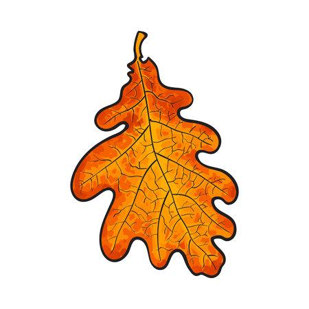 licencia hermoso color amarillo rojo del otoño de color roble, ilustración vectorial aislados en fondo blanco. dibujo botánico de una hoja de roble rojo, temporada de otoño, el elemento de decoración de otoño Ilustración de vector
