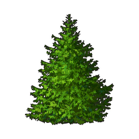 evergreen tree: Fluffy Christmas tree with no decorations, sketch style vector illustration isolated on white background. Evergreen tree, Christmas decoration Illustration