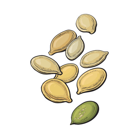 pumpkin seeds: Whole and peeled pumpkin seeds, vector illustration isolated on white background. Drawing of pumpkin seeds on white background, delicious healthy vegan snack Illustration