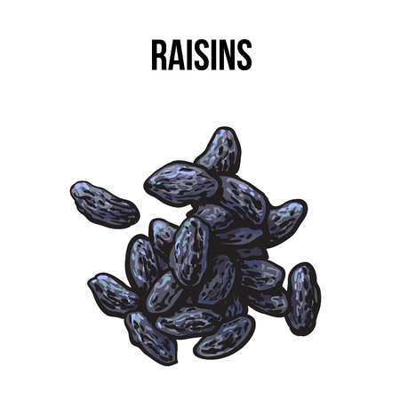 dehydrated: Pile of dried black raisins, sketch style vector illustration isolated on white background. Drawing of black raisins, natural sweets, vegetarian snack
