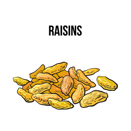 dehydrated: Pile of dried white raisins, sketch style vector illustration isolated on white background. Drawing of gold raisins, natural sweets, vegetarian snack