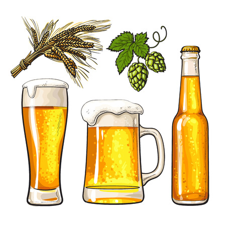 barley hop: Set of cold beer bottle, mug and glass, malt and hop, sketch vector illustrations isolated on white background. Hand drawn beer glass, mug and bottle, branch of hops and ears of barley, Oktoberfest