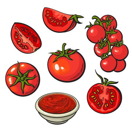 tomatoes: Set of sketch style vector illustrations of ripe red tomatoes isolated on white background. Whole, half and quarter tomato, top and side view, bunch of cherry tomatoes, bowl of tomato sauce