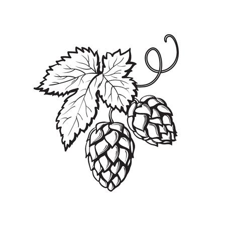 Grüne Hopfenpflanze, Illustration Skizze Stil Vektor isoliert auf weißem Hintergrund. Realistische Hand gezeichnet reifen Hopfenzapfen, Bierbrauen Zutat Vektorgrafik