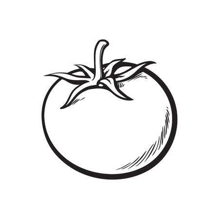 appetizing: Sketch style drawing of shiny ripe tomato, vector illustration isolated on white background. Appetizing bright red tomato, side view, hand drawn illustration