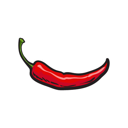 Hand drawn red hot chili pepper, sketch style vector illustration isolated on white background. Chili pepper, spice, traditional ingredient of Mexican cuisine