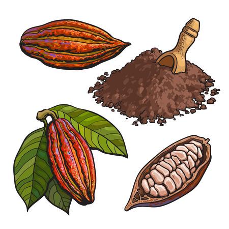 Kakaofrucht, Bohnen und Pulver, Satz Stil Vektor-Illustrationen isoliert auf weißem Hintergrund. Hand gezeichnet Kakaofrucht, rohe Kakaobohnen und Heap-Pulver mit einem hölzernen Skoop Standard-Bild - 67895414