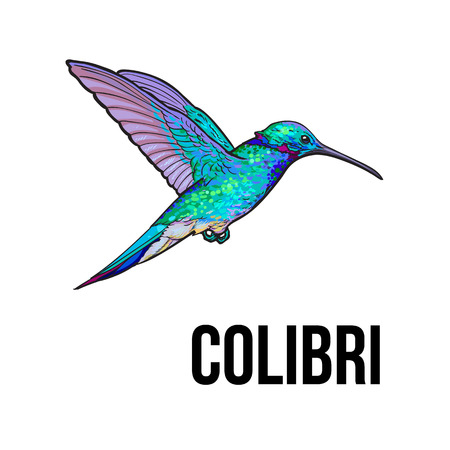Hand drawn sapphire hummingbird, colorful sketch style vector illustration isolated on white background. Hand drawing of turquoise humming bird, scientific ornithological illustration