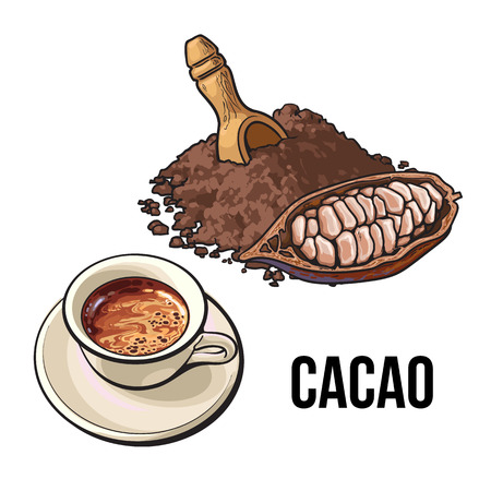 Hand drawn pile of cocoa powder, cacao fruit and cup of hot chocolate, sketch vector illustration isolated on white background. Ground cocoa powder, raw cacao beans and hot chocolate
