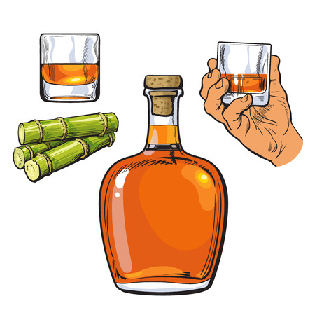 sugarcane: Jamaican rum bellied bottle, hand holding shot glass and sugar cane, sketch illustration isolated on white background. Realistic hand drawing of unlabeled rum bottle, shot glass and sugarcane