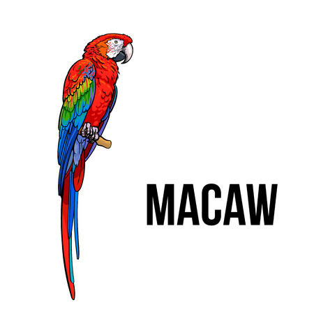 Hand drawn red green-winged macaw parrot seating on a tree branch, colorful sketch style vector illustration isolated on white background. Hand drawing of macaw, scientific ornithological illustration Illustration