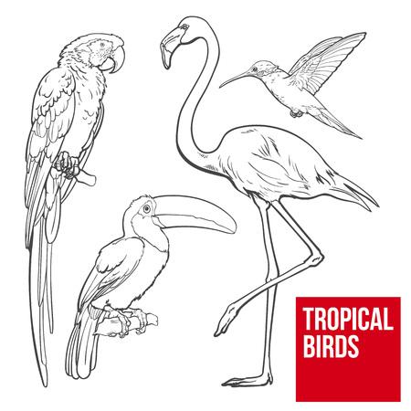 Heldere en kleurrijke exotische tropische vogels - flamingo, ara, kolibrie en toekan, set van schets stijl vectorillustraties geïsoleerd op een witte achtergrond. Set hand getrokken tropische vogels
