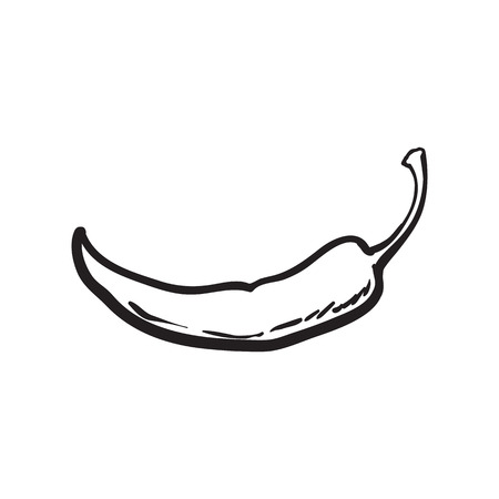 capsaicin: Hand drawn red hot chili pepper, black and white sketch style vector illustration isolated on white background. Chili pepper, spice, traditional ingredient of Mexican cuisine Illustration