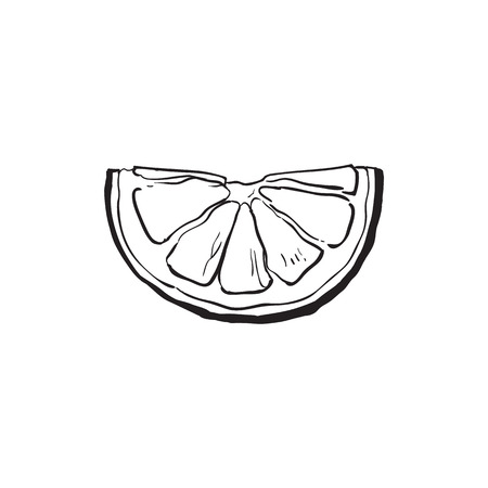 Hand drawn slice of lemon, sketch style vector illustration isolated on white background. Drawing black and white of lemon slice, citrus, side view, colorful illustration