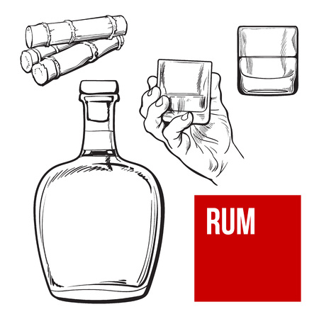 sugar cane: Jamaican rum bellied bottle, hand holding shot glass and sugar cane, sketch vector illustration isolated on background. black and white hand drawing of unlabeled rum bottle, shot glass and sugarcane