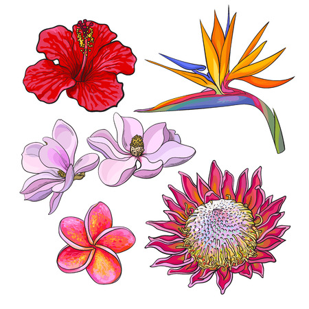 Tropical flowers - hibiscus, protea, plumeria, bird of paradise and magnolia, sketch style vector illustration isolated on white background. Colorful realistic hand drawing of exotic, tropical flowers 일러스트