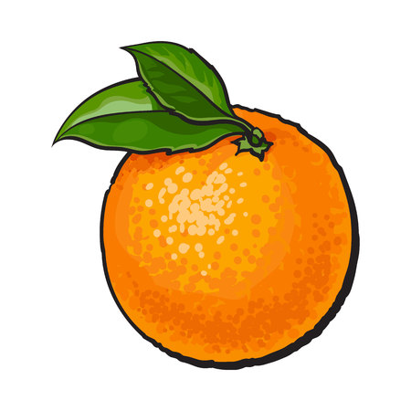 Realistic colorful hand drawn ripe, unpeeled orange with green leaves, sketch style vector illustration isolated on white background. Hand drawing of fresh whole orange on white background