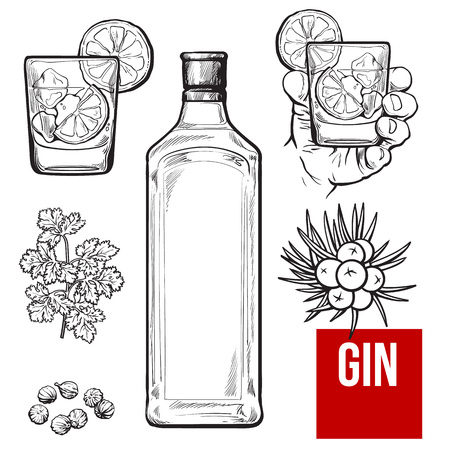 gin: Gin bottle, shot glass with ice and lime, juniper berries, parsley, cardamom, sketch vector illustration isolated on white background. hand drawn gin bottle, shot glass and cocktail ingredients