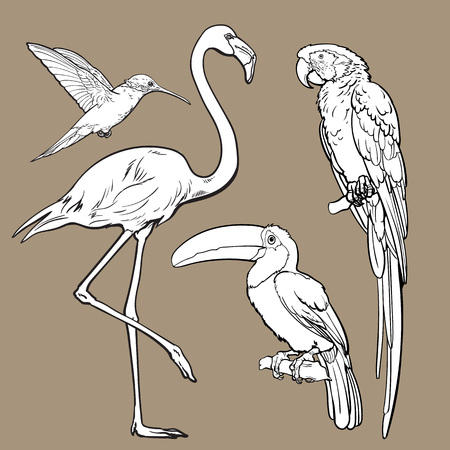 Bright exotic tropical birds - flamingo, macaw, hummingbird and toucan, set of sketch style vector illustrations isolated on white background. Set of hand drawn tropical birds Illustration