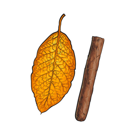 Unlabelled unlit brown Caribbean, Cuban cigar, sketch vector illustration isolated on white background. Whole, new hand drawn cigar, ready to smoke, tobacco product Ilustração