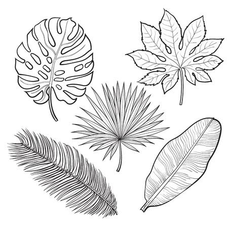 Set van tropische palm verlaat, schets stijl vectorillustratie geïsoleerd op een witte achtergrond. Realistische handtekeningen van monstera, banaan, palmen als jungle, tropische bosontwerpelementen