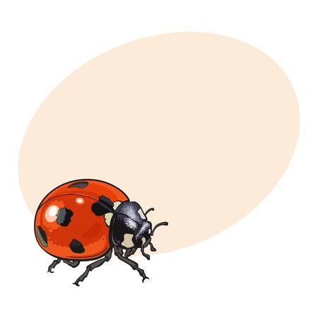 Mariquita Roja, Mariquita Con Manchas Negras, Ilustración Boceto ...
