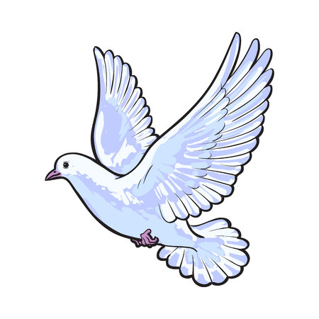 vuelo libre paloma blanca, ilustración del vector del estilo del bosquejo aislado sobre fondo blanco. Dibujo realista de la mano blanca paloma, paloma de alas aleteo, símbolo del amor, el romance y la inocencia, icono de matrimonio Ilustración de vector