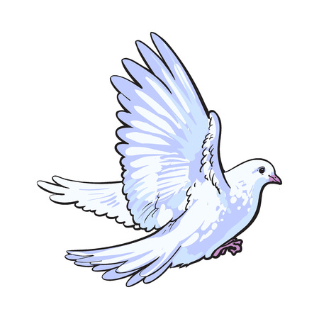 idyll: Free flying white dove, sketch style vector illustration isolated on white background. Realistic hand drawing of white dove, pigeon flapping wings, symbol of love, romance and innocence, marriage icon