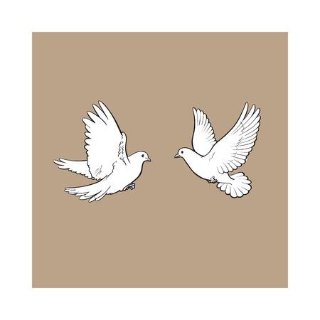 Dos palomas blancas volando libres, ilustración vectorial boceto aislado en el fondo marrón. Realista par dibujado a mano de palomas blancas, palomas batiendo las alas, símbolo del amor y el romance, icono de matrimonio
