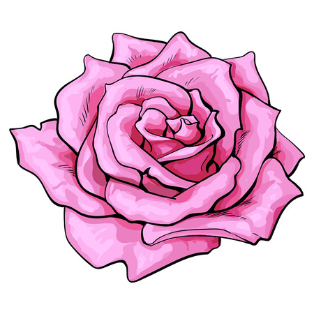Deep pink rose bud, top view sketch style vector illustration isolated on white background. Realistic hand drawing of open pink rose flower, decoration element