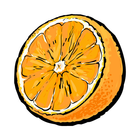Realistic colorful hand drawn half of ripe, juicy orange, sketch style vector illustration isolated on white background. Hand drawing of unpeeled orange half on white background Illustration