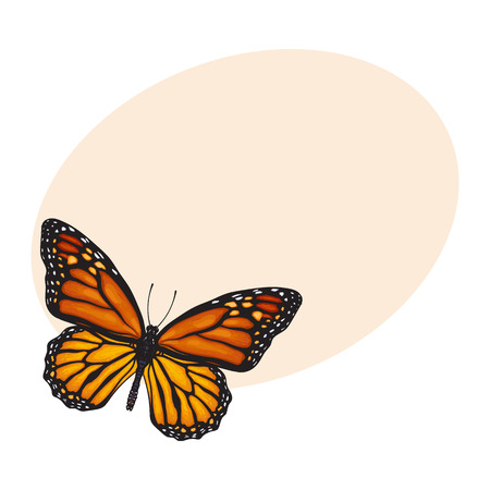 milkweed: Top view of beautiful monarch butterfly, sketch illustration isolated on background with place for text. color Realistic hand drawing of monarch butterfly on white background