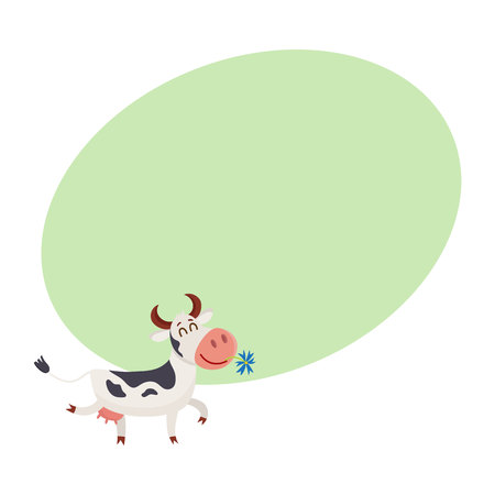 Funny black white spotted cow walking with eyes closed and daisy flower in mouth, cartoon vector illustration on background with place for text. Funny cow holding daisy in mouth, dairy farm concept Illustration
